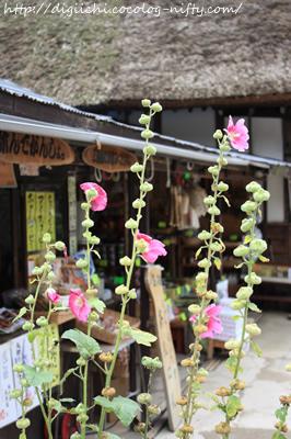 Photo_flower_2