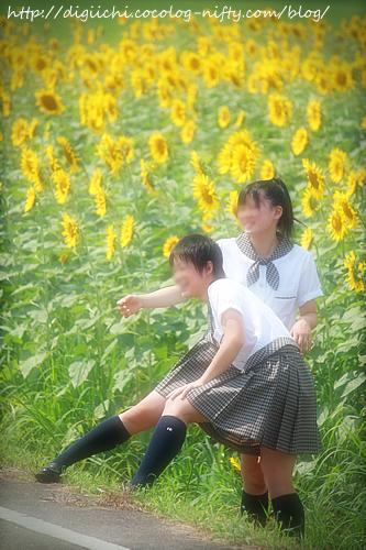 Photo_himawari12