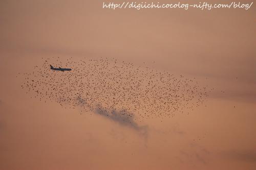Photo_birds_1