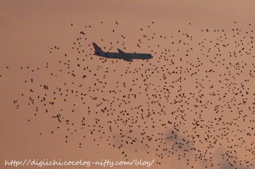 Photo_birds_2