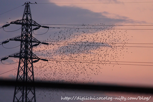 Photo_birds_3